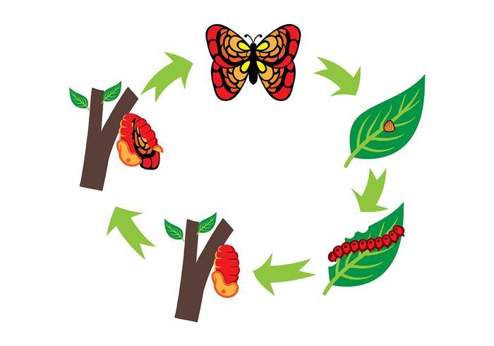 Vector de cycle de vie Caterpillar et papillon