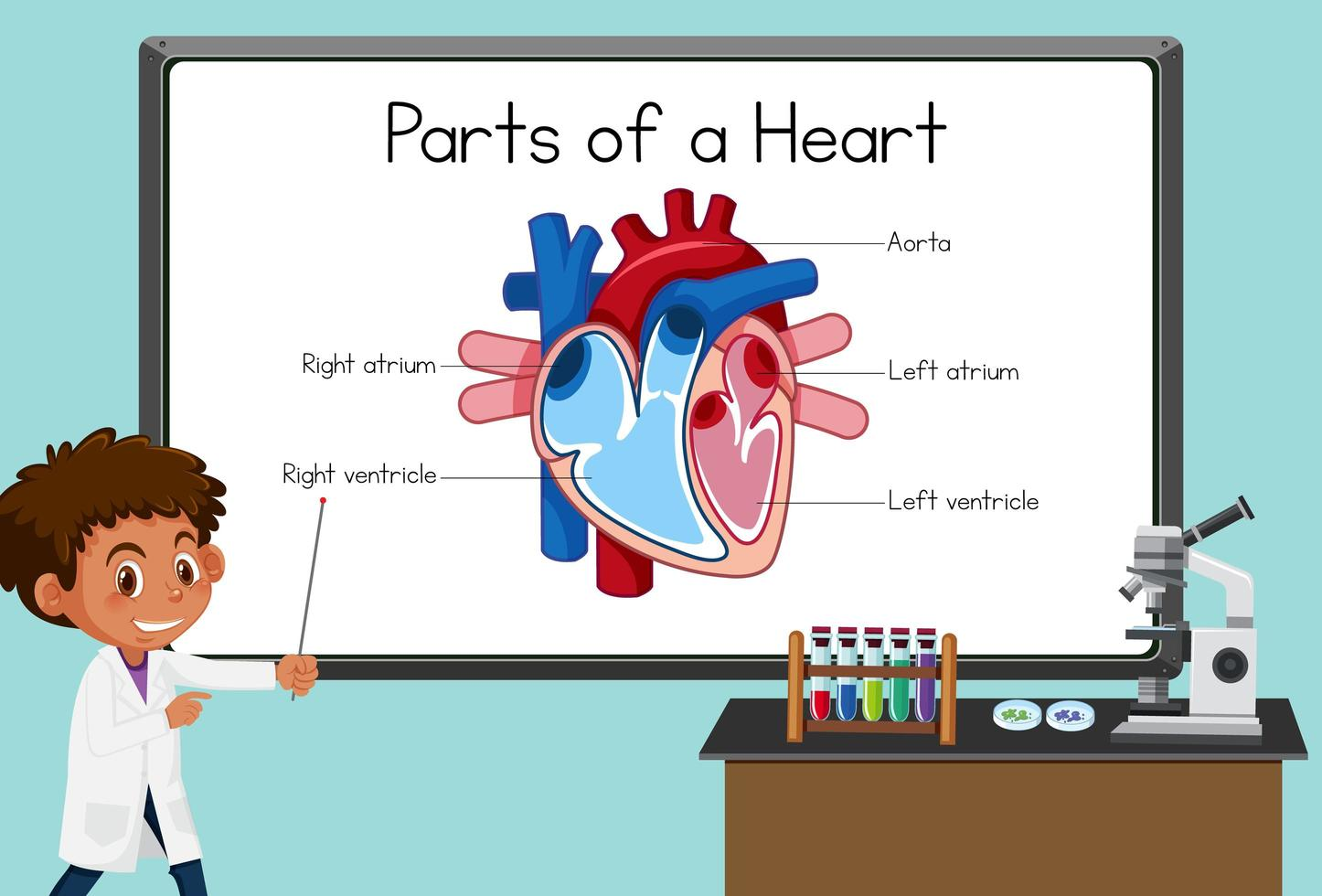 Jeune scientifique expliquant les parties d'un cœur devant un tableau en laboratoire vecteur
