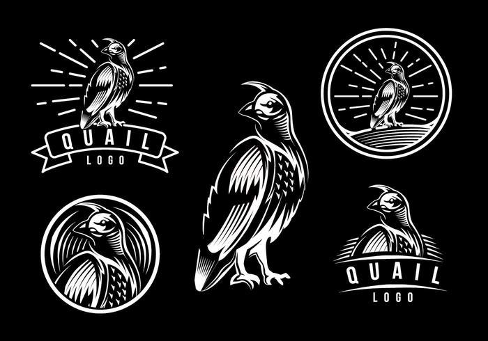 Modèle de logo de caille vecteur