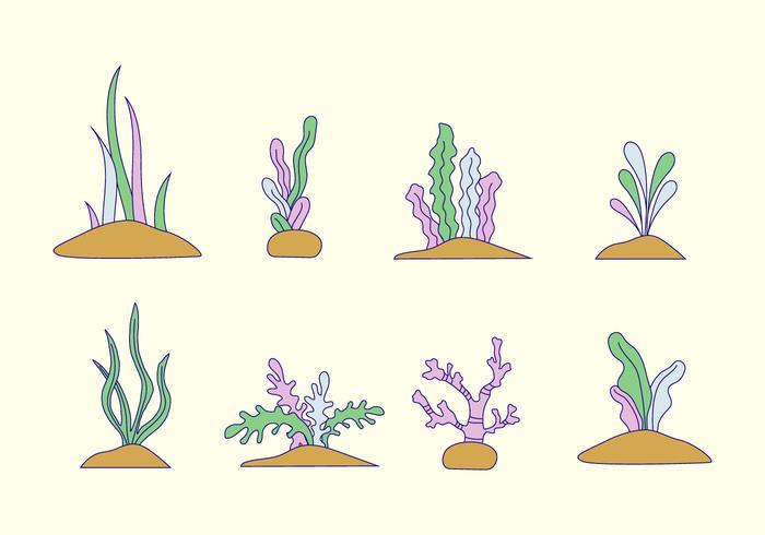 Vecteur d'algues
