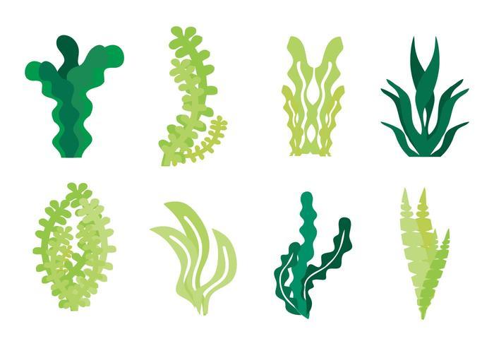 Vecteur d'icônes d'algues gratuites
