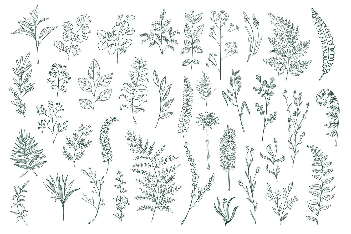 pack de conception botanique dessiné à la main vecteur