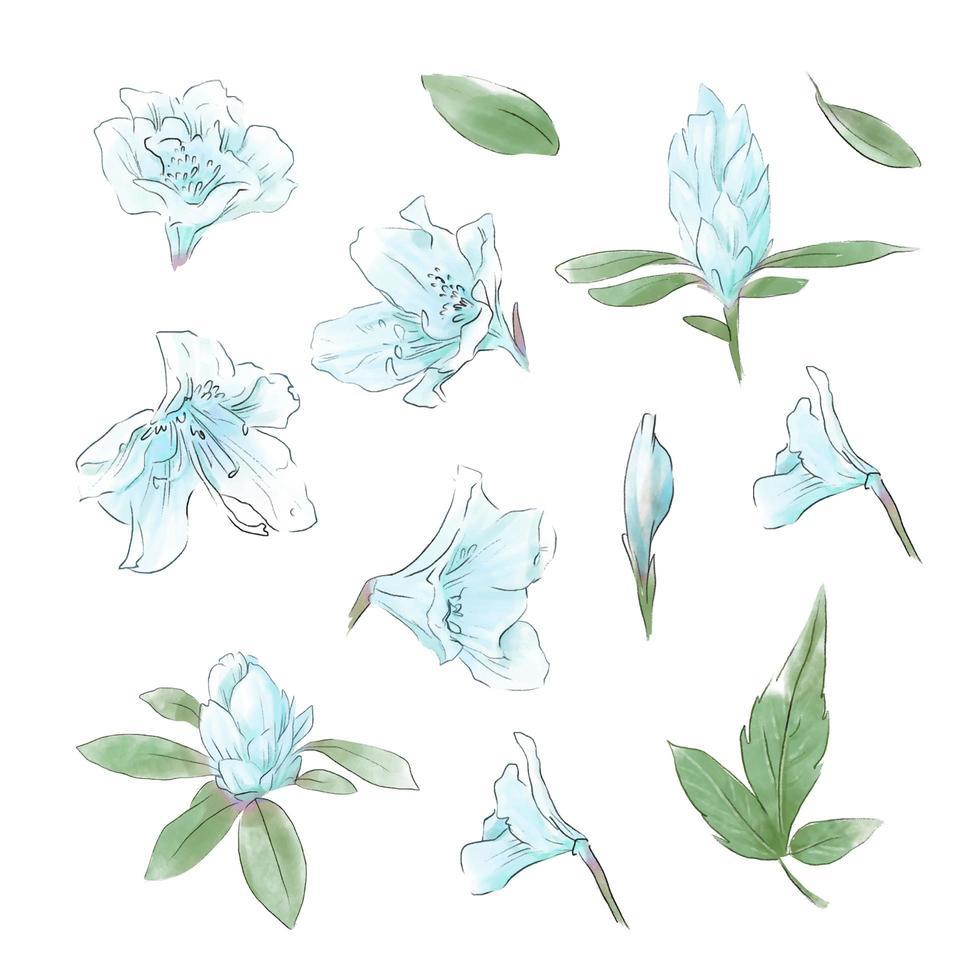 ensemble de feuilles et de fleurs tendres aquarelle vecteur