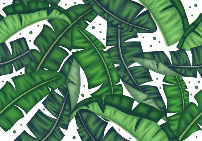 Modèle sans soudure de feuilles de bananier botanique vecteur