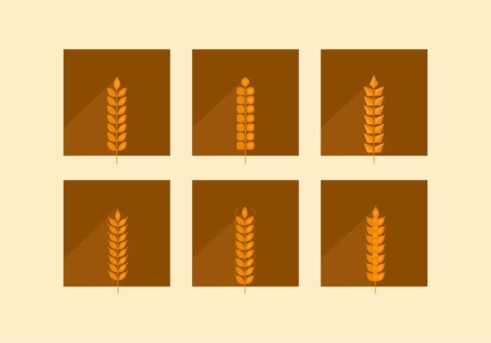 Oreilles plates de blé brun vecteur