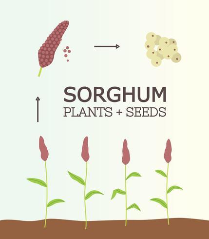 Vecteur gratuit de plante de sorgho