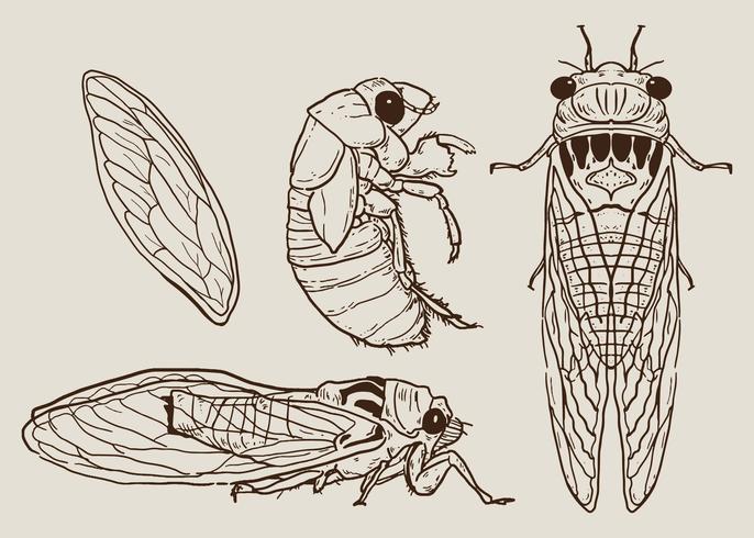 Cicada Set Vector dessinés à la main