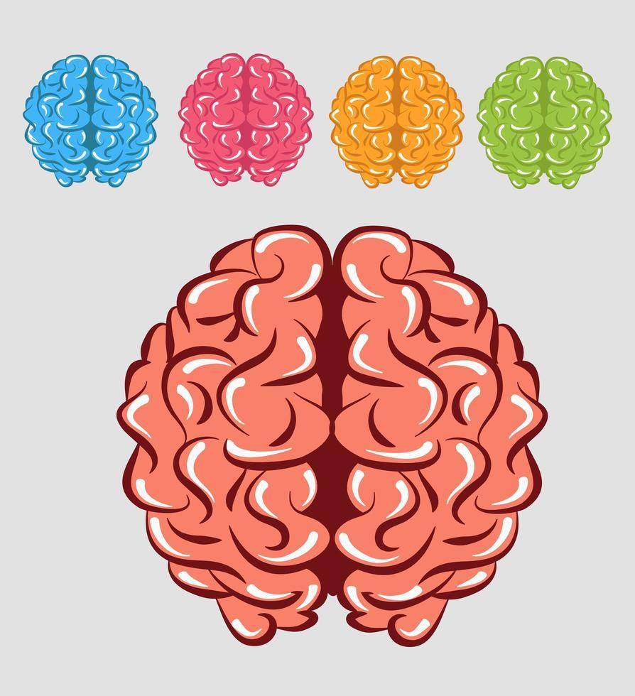 cerveaux humains colorés vecteur