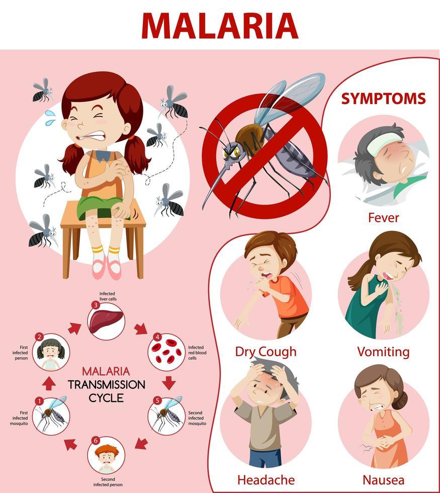 infographie des informations sur les symptômes du paludisme vecteur