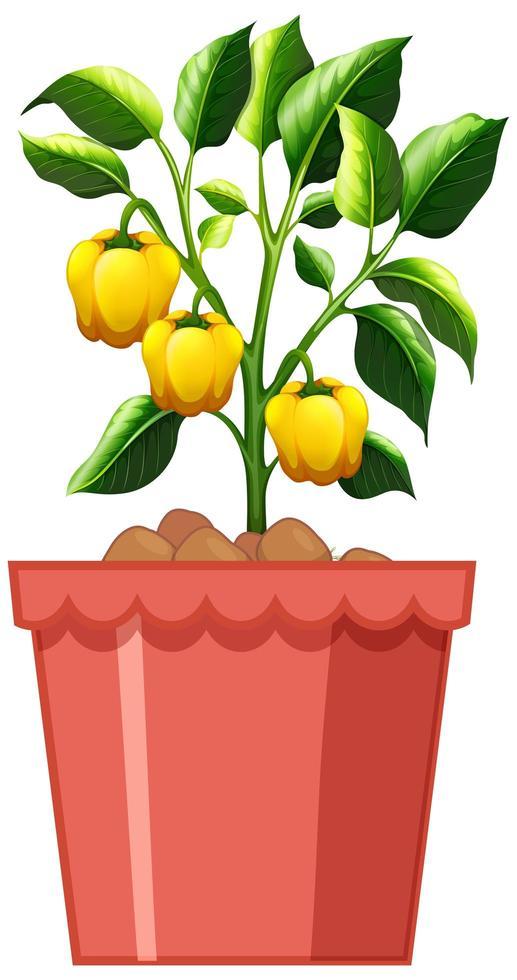 Plante de poivron jaune en pot rouge isolé sur fond blanc vecteur