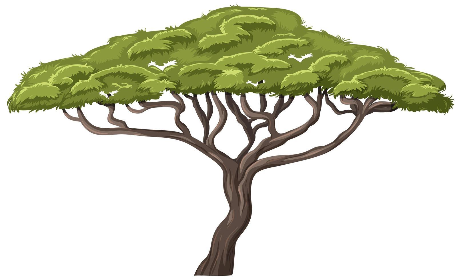arbre isolé sur fond blanc vecteur