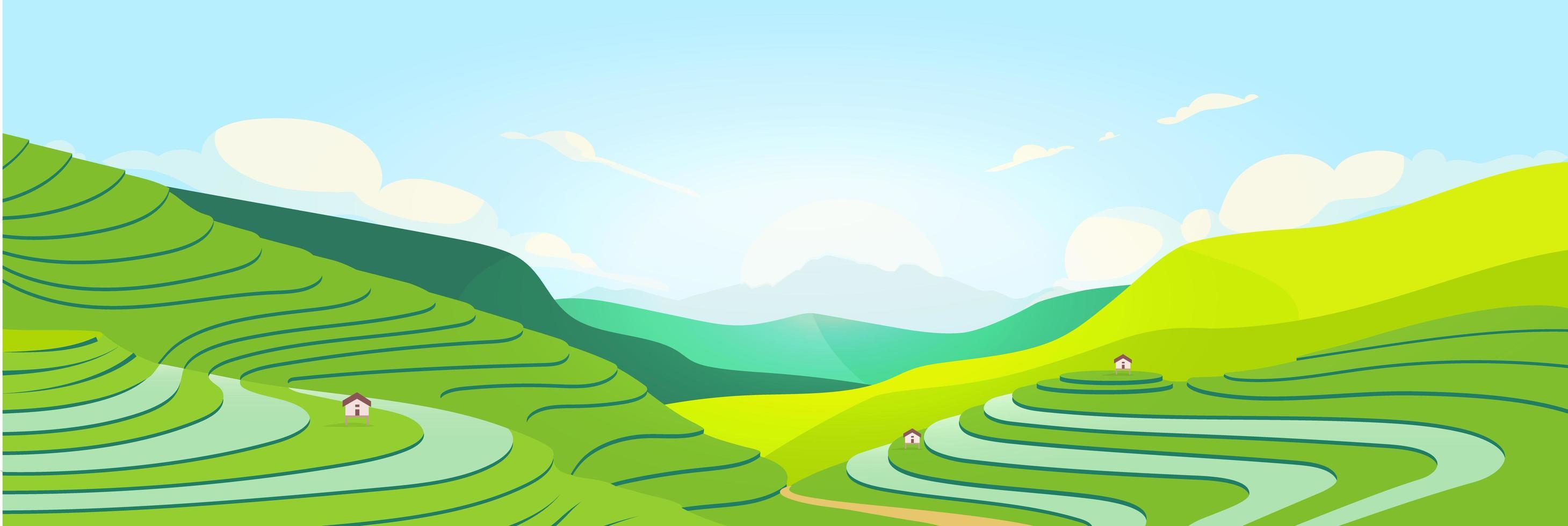 champs en terrasses au coucher du soleil vecteur