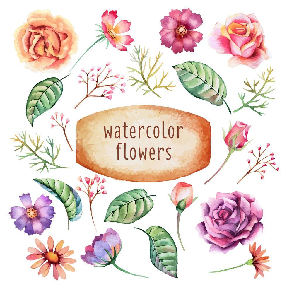 collection de fleurs aquarelle vecteur