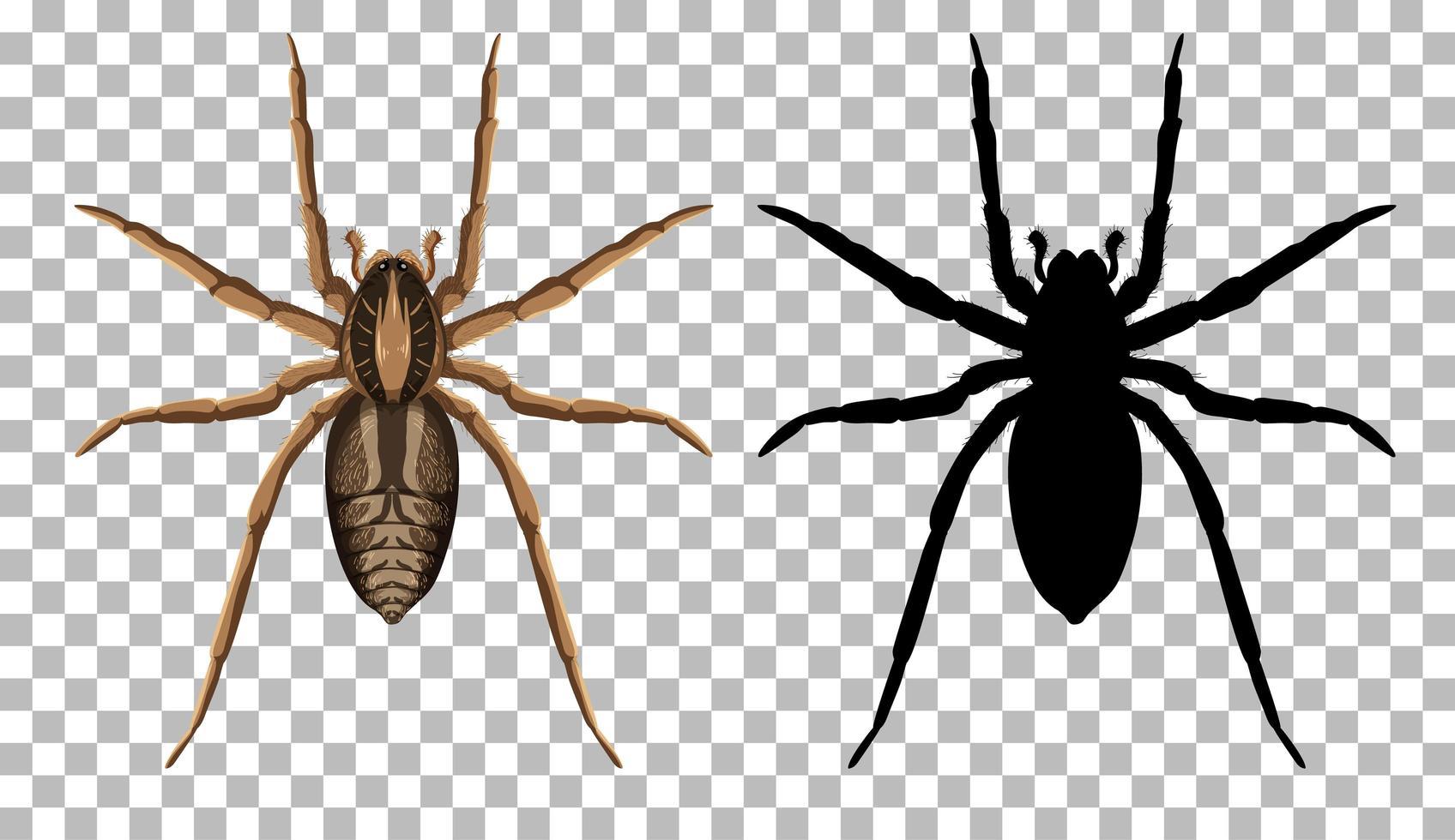 Araignée-loup avec sa silhouette isolée sur fond transparent vecteur