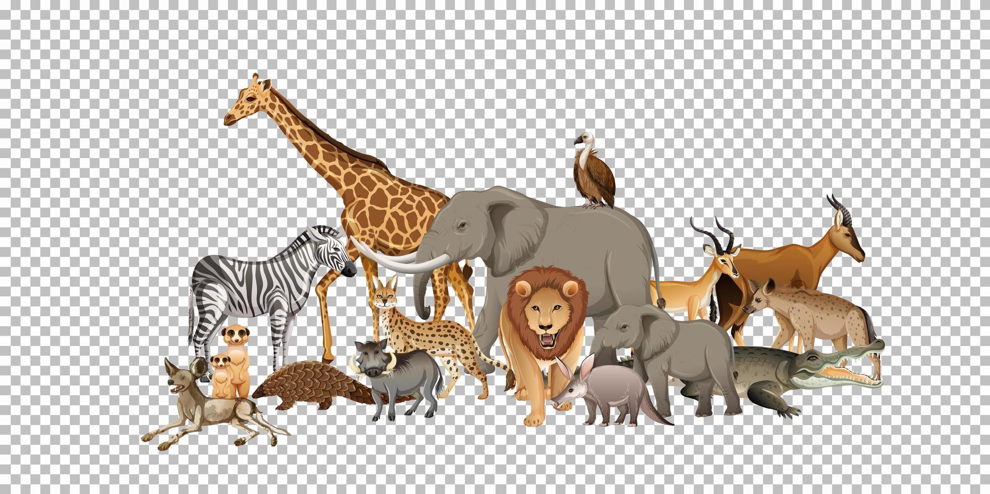 Groupe d'animaux sauvages africains sur fond transparent vecteur