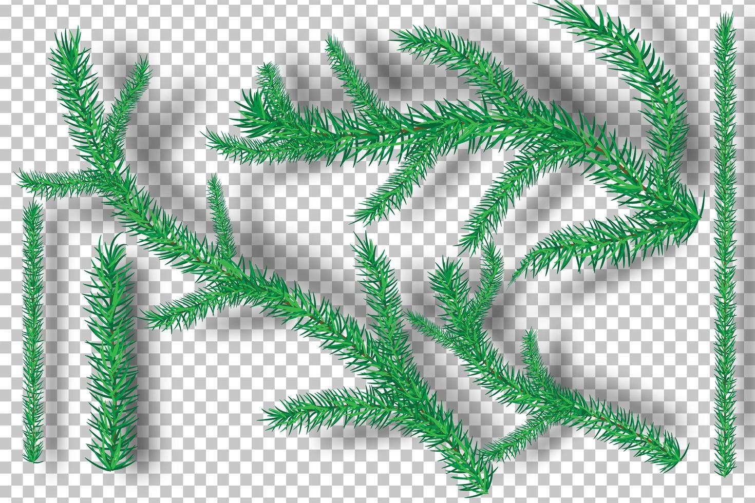 branches d'arbres de Noël sur fond de transparence vecteur
