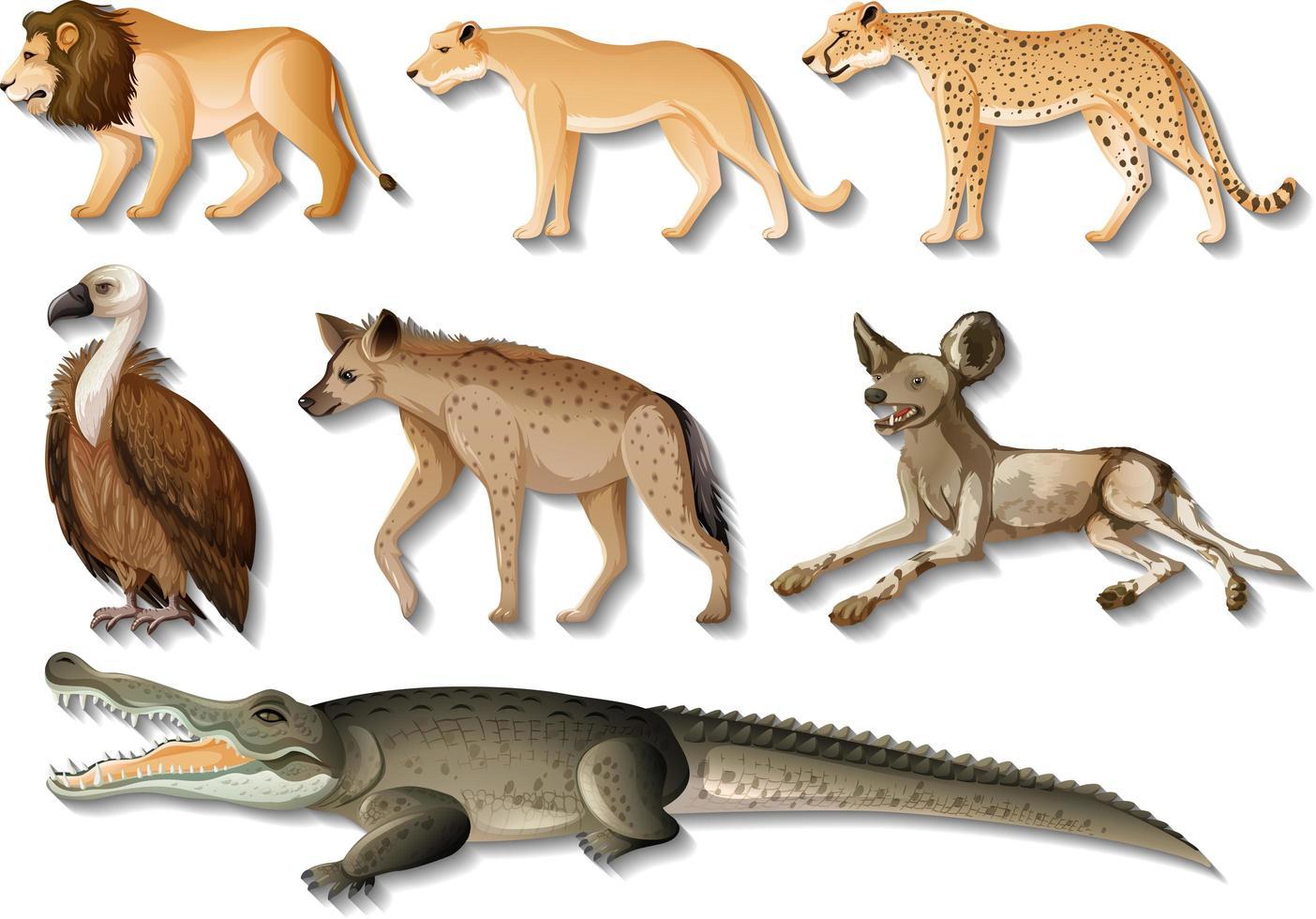 ensemble d'animaux sauvages africains isolés sur fond blanc vecteur