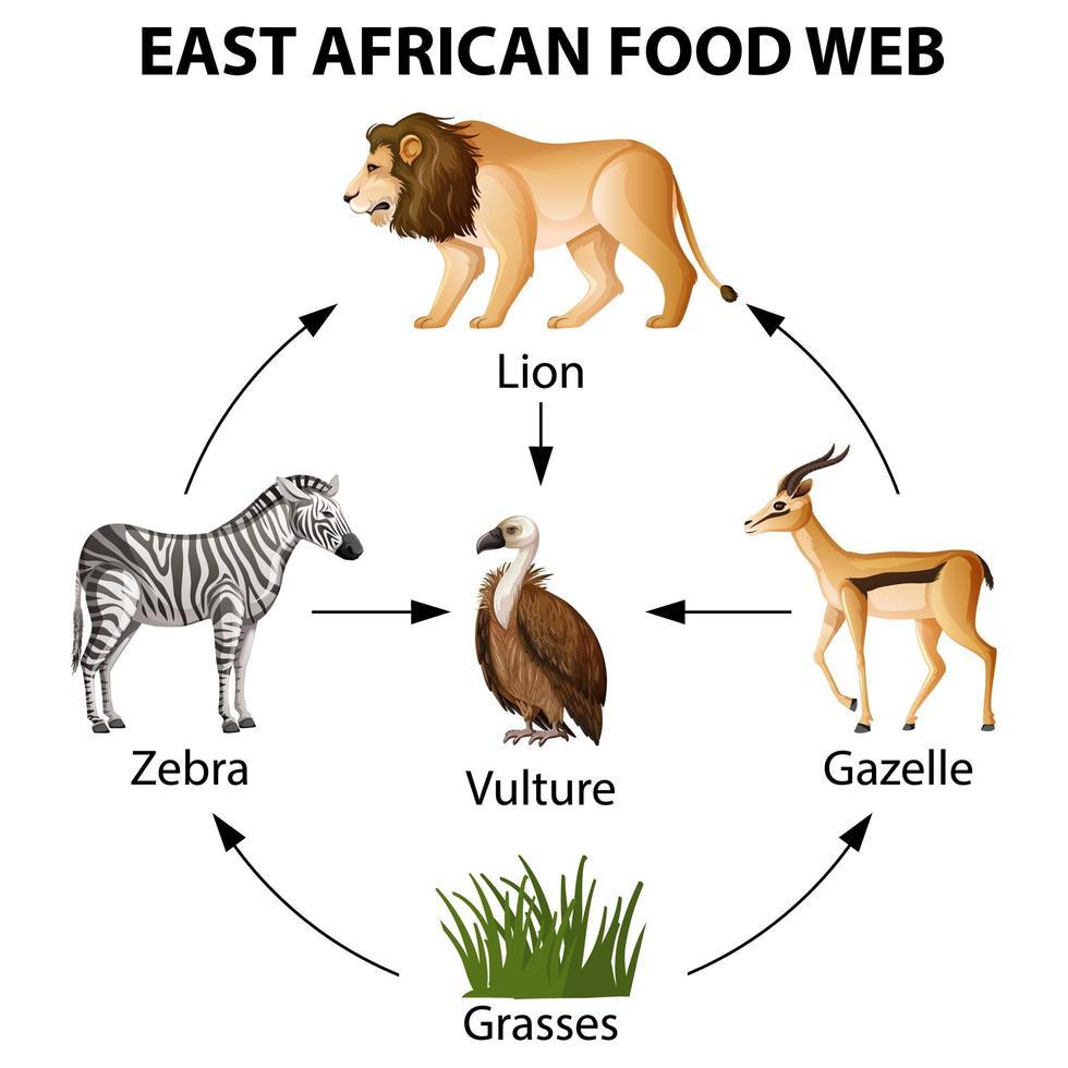 infographie du réseau trophique d'Afrique de l'Est vecteur
