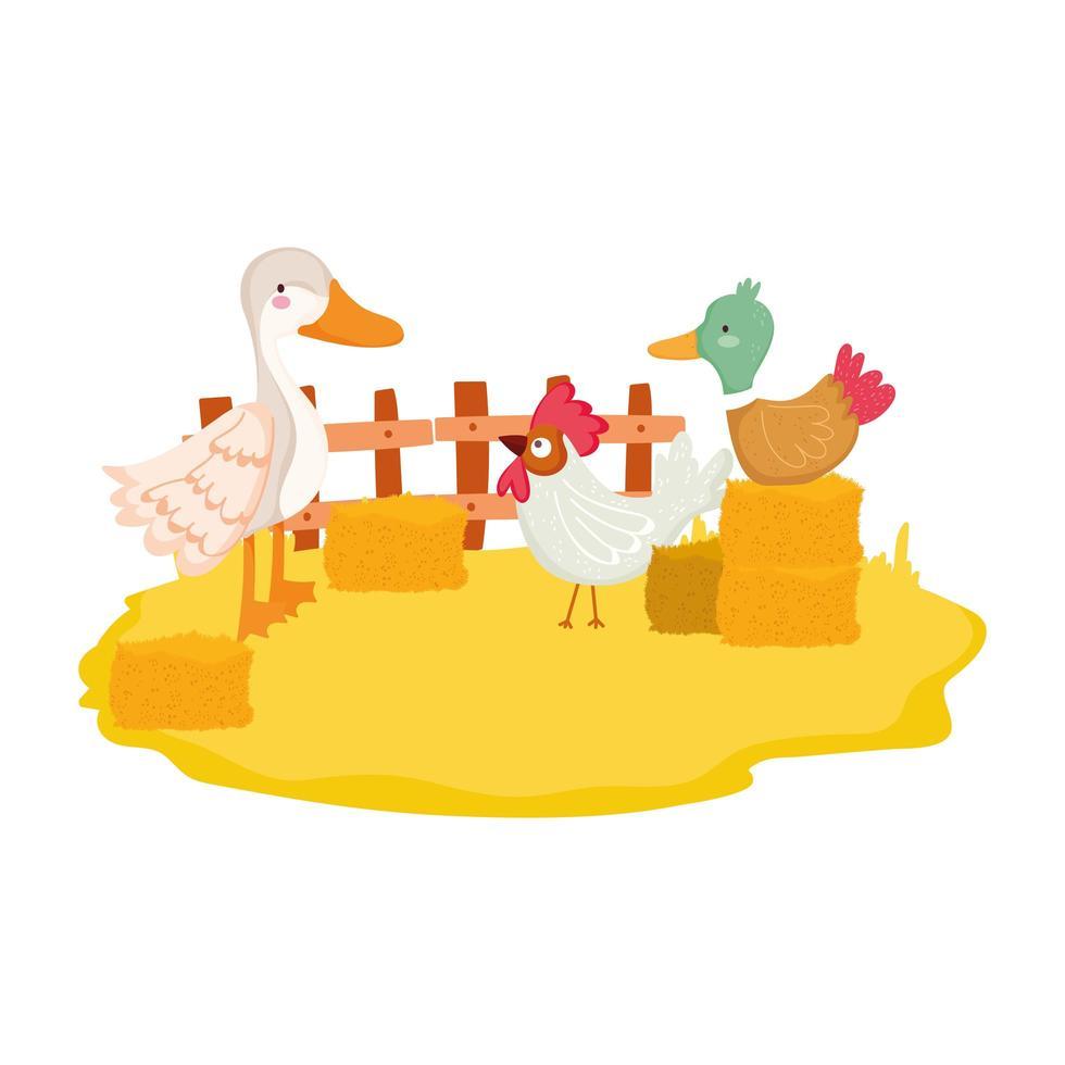 animaux de la ferme canard oie et coq pile de foin vecteur