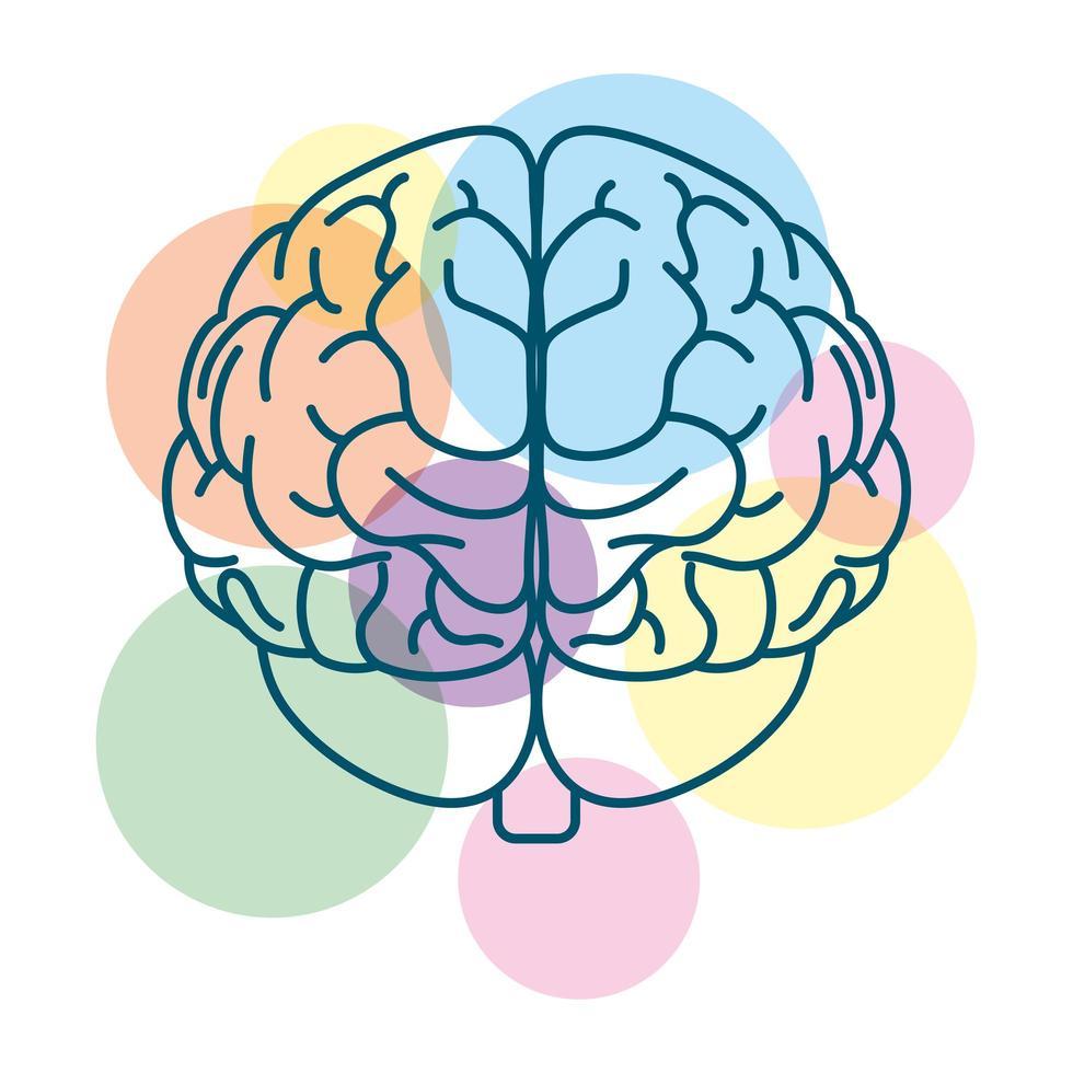 cerveau humain avec des cercles colorés vecteur