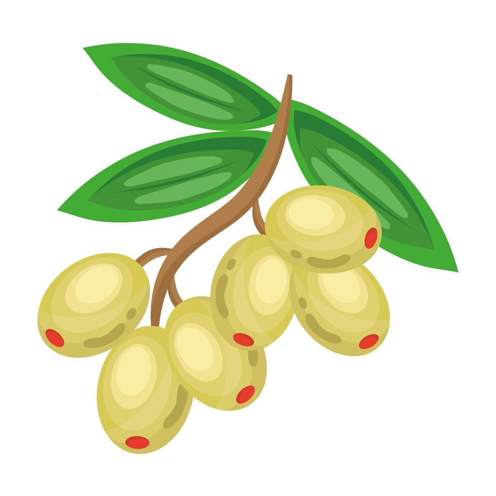 icône de nourriture saine de graines d'olive de légumes frais vecteur