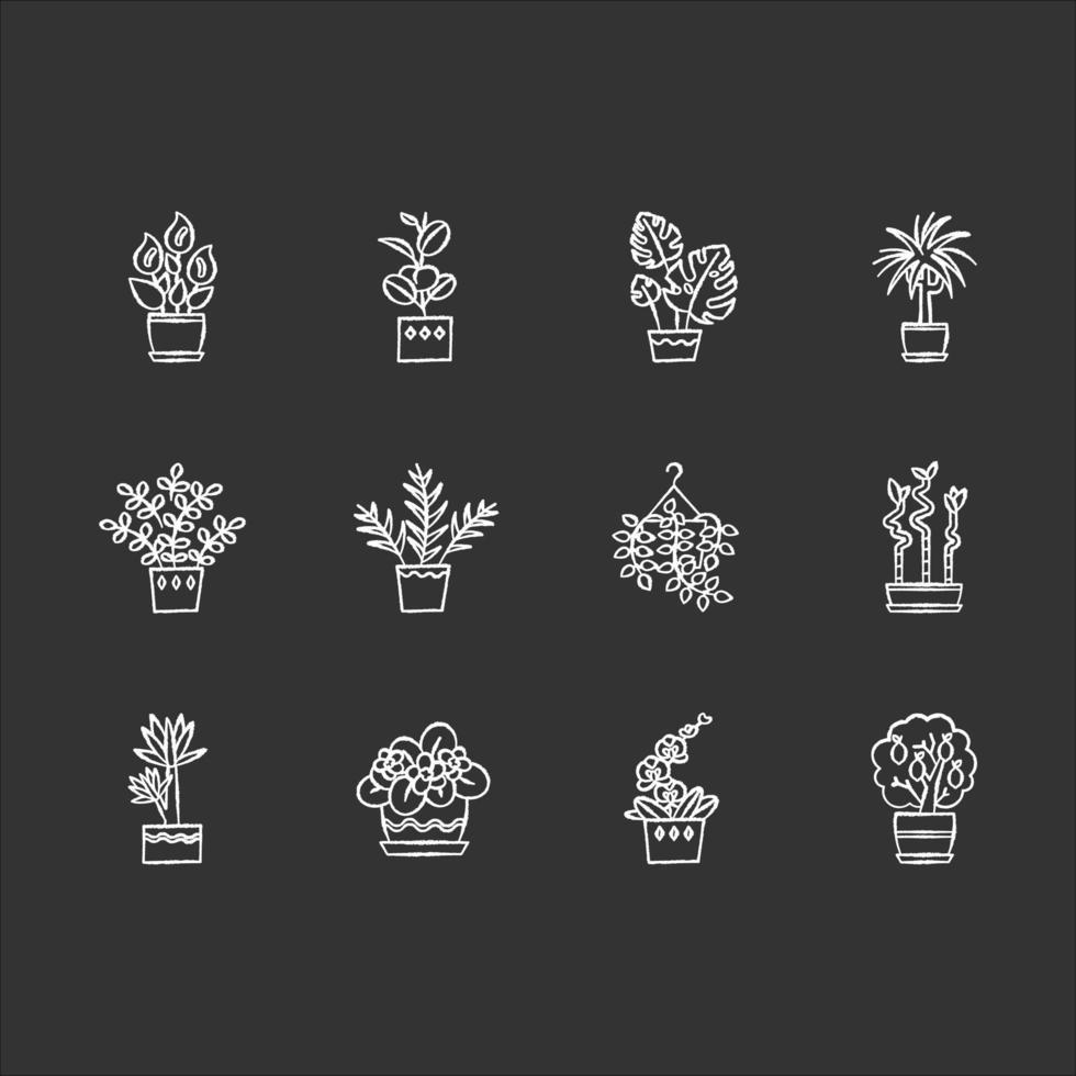 plantes d'intérieur craie icônes blanches sur fond noir. Plantes d'intérieur. décoration de maison. ficus, monstera, violette africaine, bambou. lis de la paix, pothos, palmier de salon. illustrations de tableau vectoriel isolé