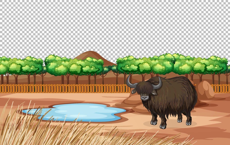 yak dans la nature paysage scène transparente vecteur