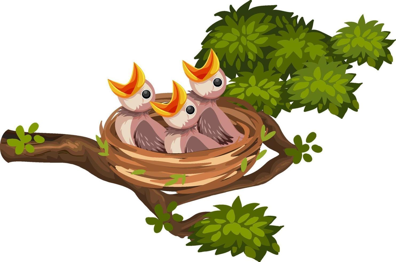 poussins affamés sur le nid vecteur
