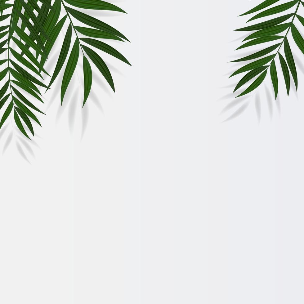 modèle d'espace de copie de fond blanc tropical feuilles de palmier réaliste naturel vecteur