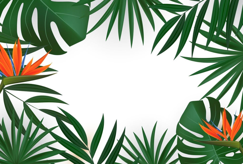 feuilles de palmier tropical réaliste naturel sur fond blanc. vecteur