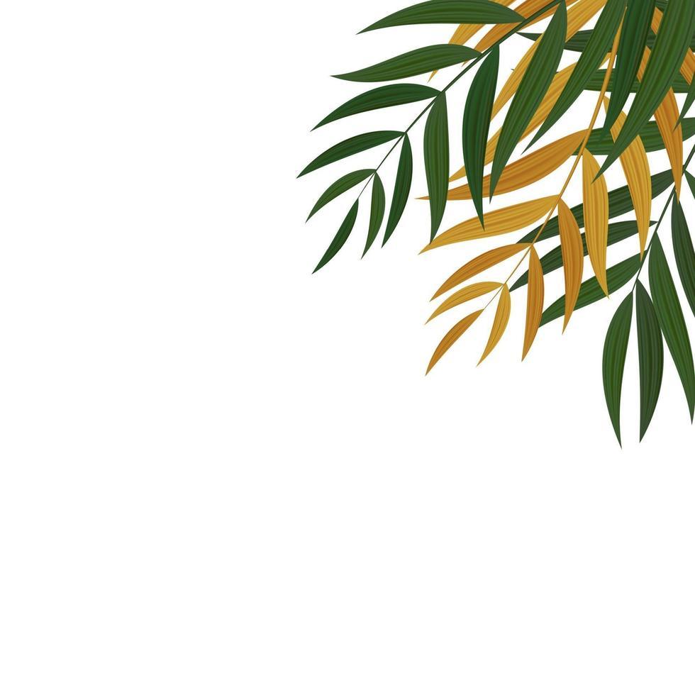 feuilles de palmier tropicales vertes réalistes abstraites. vecteur
