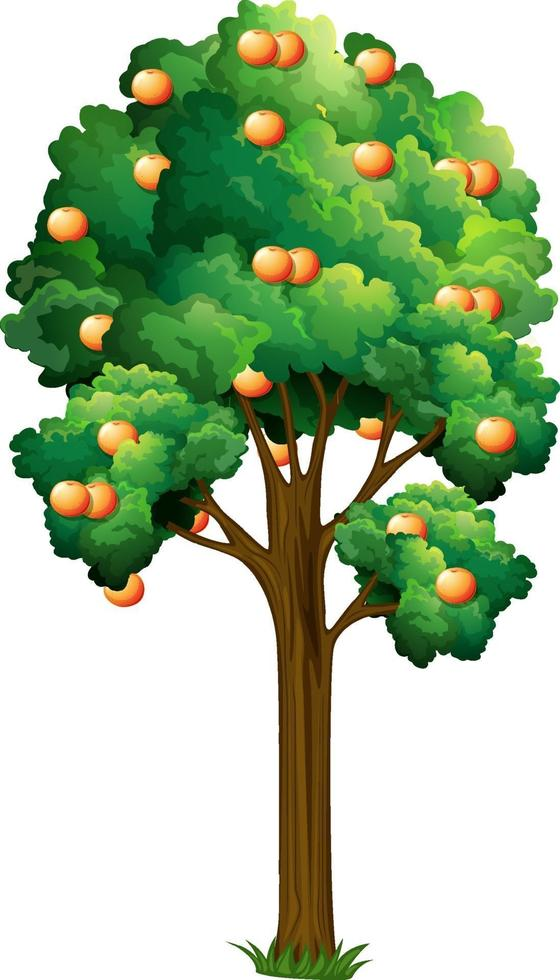 arbre fruitier orange en style cartoon isolé sur fond blanc vecteur