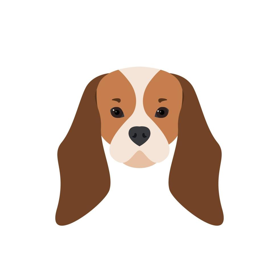 portrait de cavalier king charles spaniel. illustration de chien. vecteur