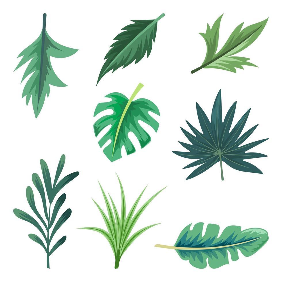 collection de belles feuilles tropicales isolé sur fond blanc. vecteur