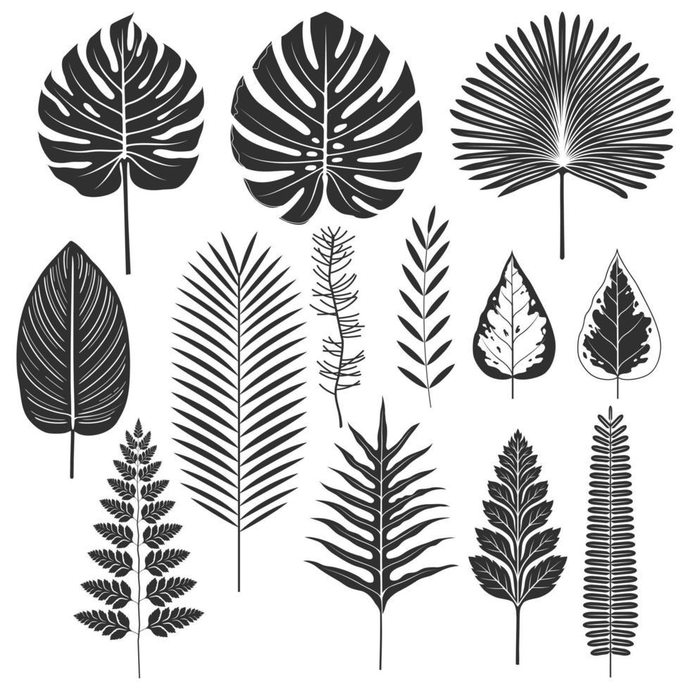 silhouette de feuille tropicale définie des illustrations vectorielles vecteur