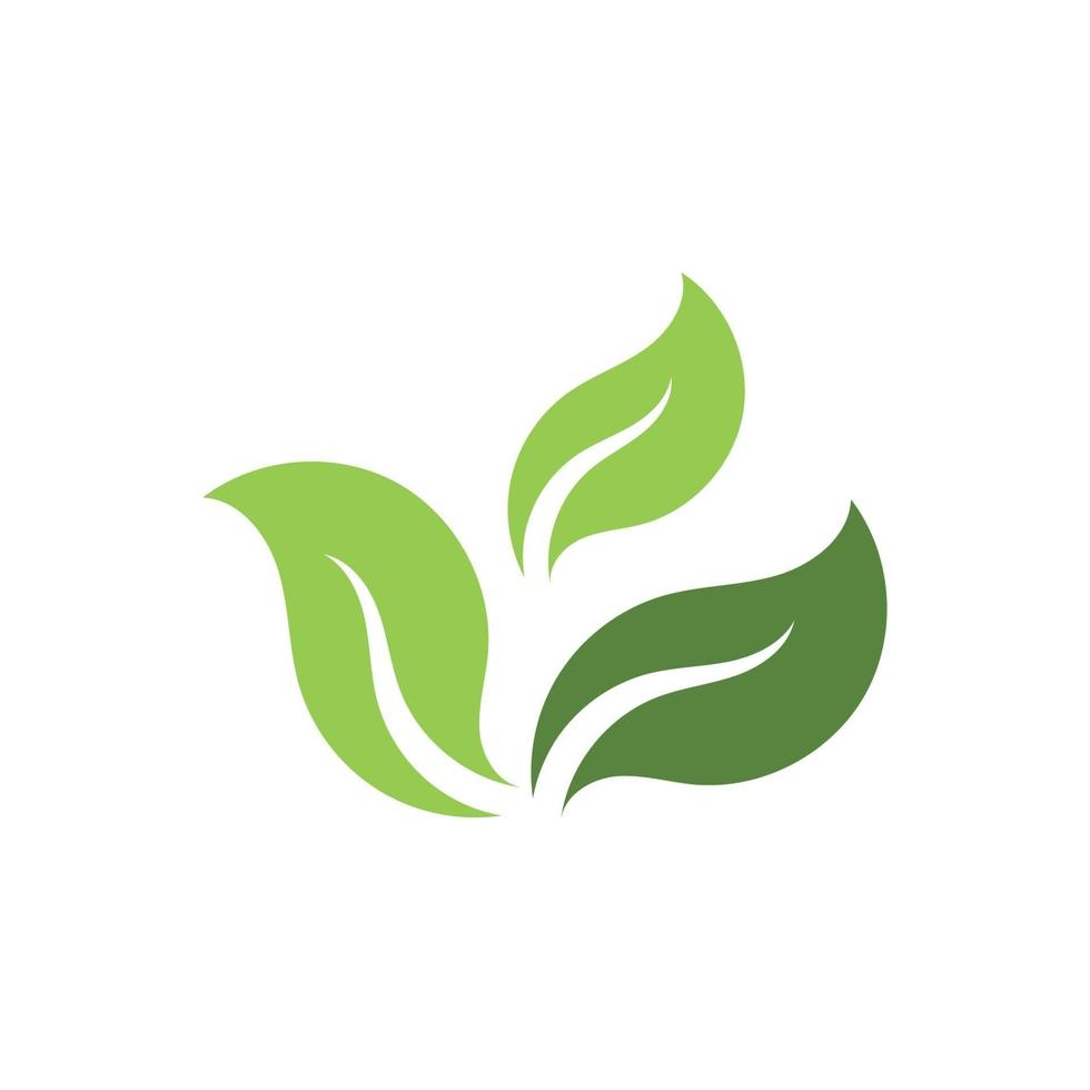 image vectorielle de feuille verte écologie nature logo élément vecteur