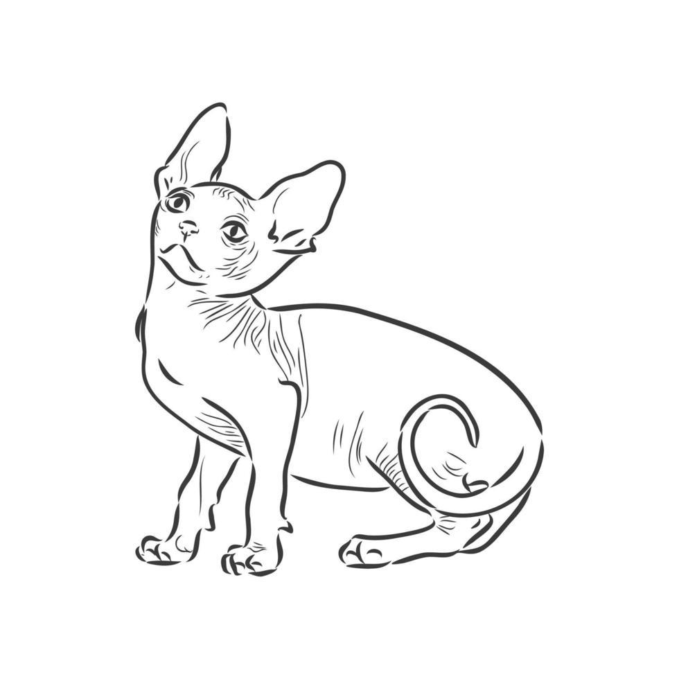 illustration vectorielle d'un chat sphynx avec une doublure isolée sur fond blanc. pour l'impression sur vêtements, papier, logo, icône, vierge pour les designers t-shirts, vaisselle, lit vecteur