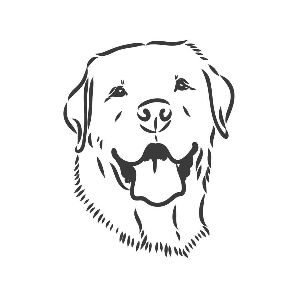 image vectorielle d'un chien labrador sur fond blanc. croquis de vecteur labrador sur fond blanc