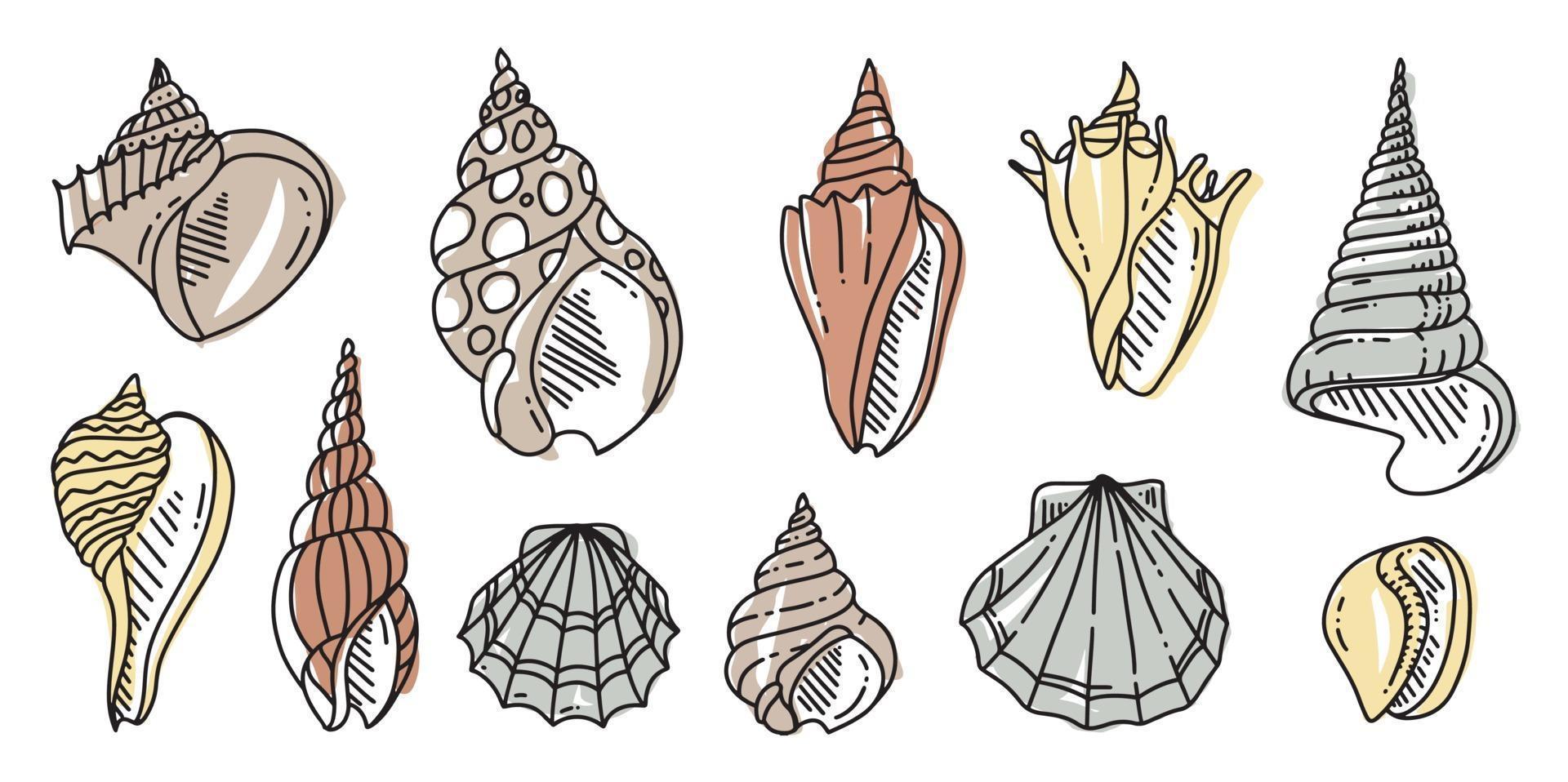 ensemble de griffonnage coloré de coquille de mer. divers coquillages dans les grandes lignes. illustration plate dessinée à la main. vecteur