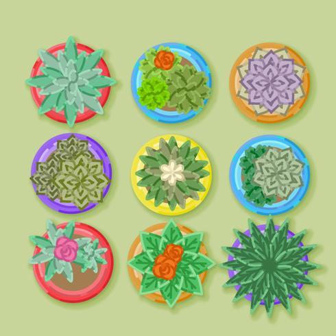 Vector Top View plantes en pot