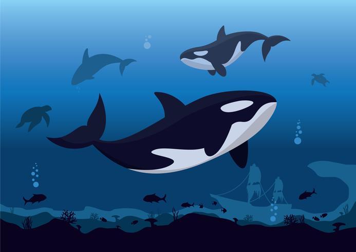 Orques vecteur