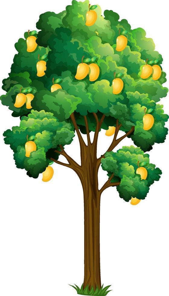 manguier jaune isolé sur fond blanc vecteur