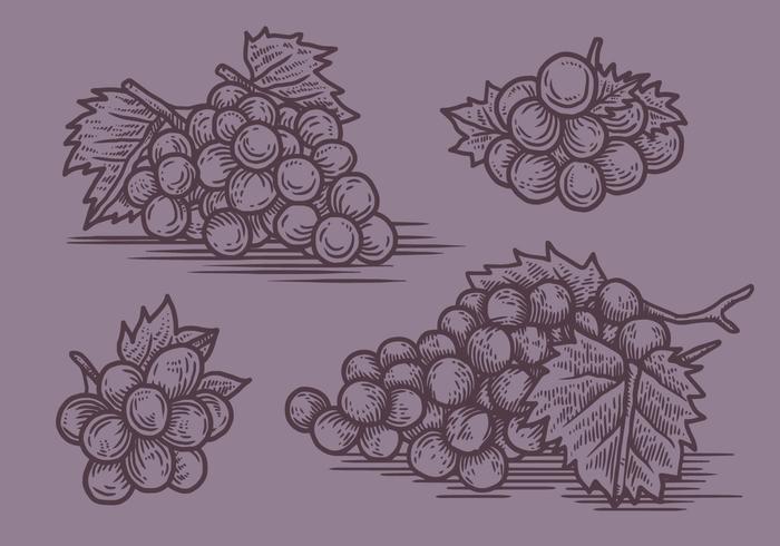 Illustration vectorielle de raisins vecteur