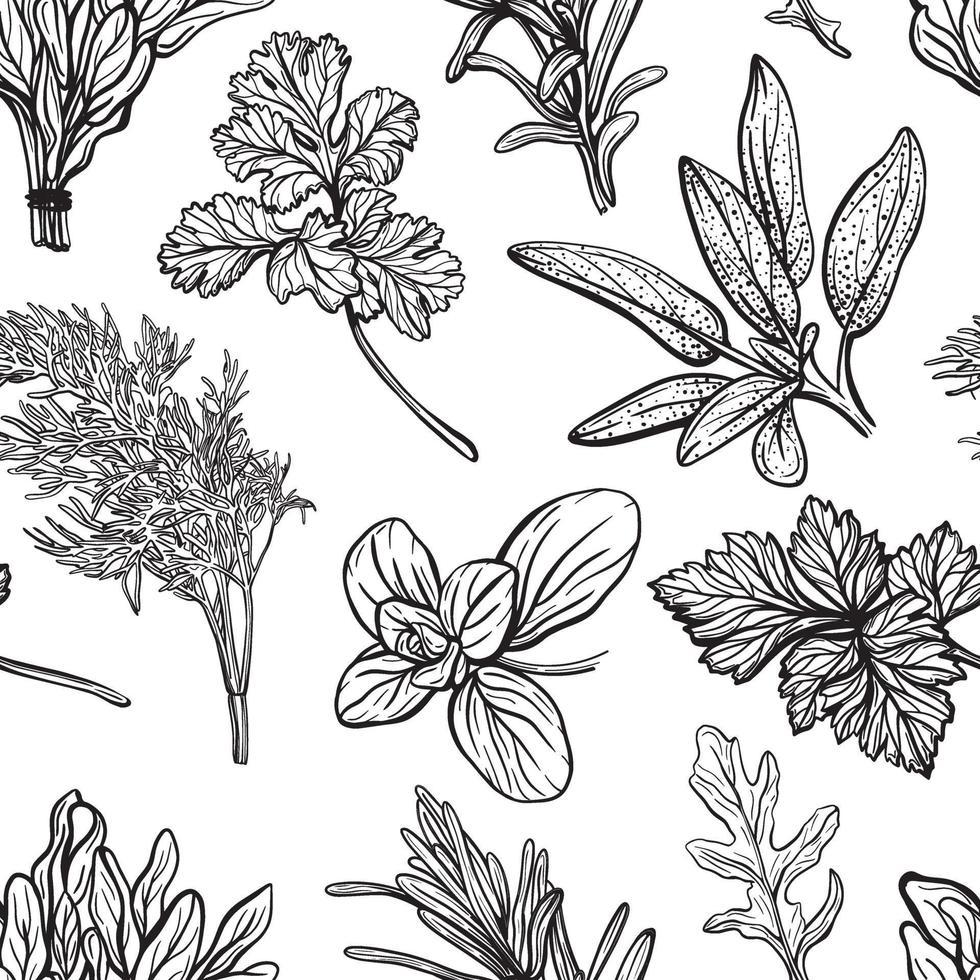 motif d'assaisonnements et d'herbes. épices aromatiques, herbes saines. basilic, origan, persil, aneth.Illustration vectorielle dessinés à la main. vecteur