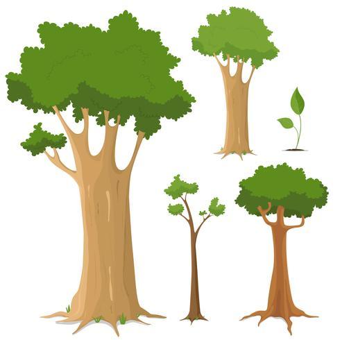 Collection d'arbres vecteur