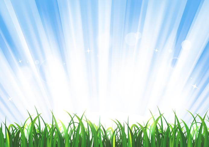 Paysage d'herbe au printemps ou en été vecteur