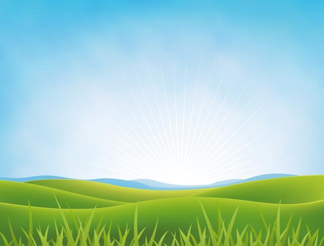 Fond d'été ou printemps Meadows vecteur