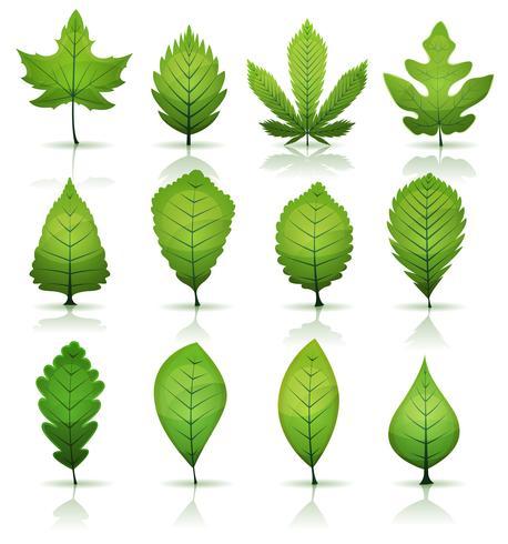 Ensemble de feuilles vertes vecteur