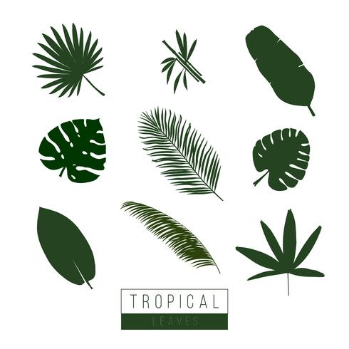 Isoler les feuilles tropicales de vecteur sur blanc.