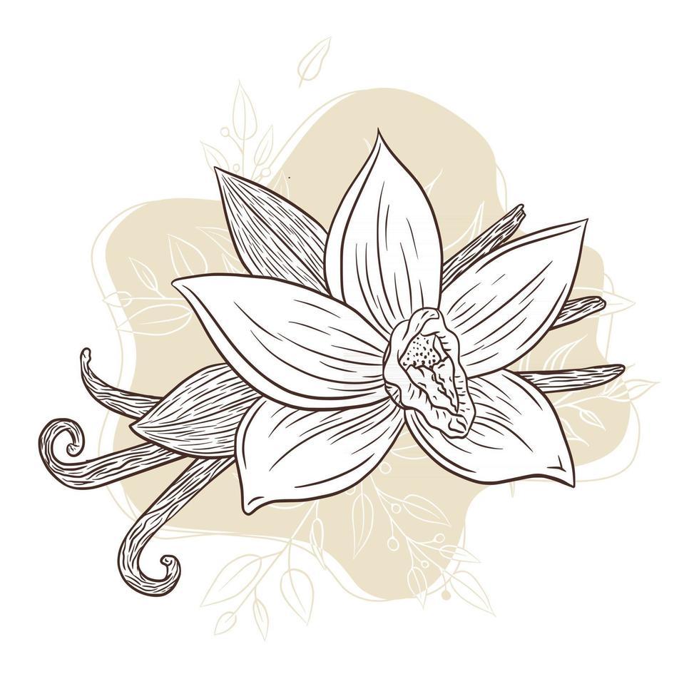 dessin au trait illustration gravée aux épices à la vanille vecteur